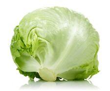 60 Graines de Laitue Iceberg Non Traité seeds plantes salade légumes potager