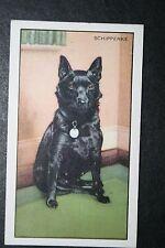 Schipperke    Vintage Coloured Card  CAT A