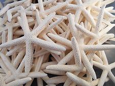 "6 White Finger Starfish 2""-3""  Beach Wedding Coastal Decor Crafts Nautical Ocean"
