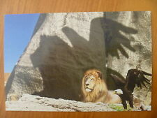 POSTCARD..ADELAIDE & MONARTO ZOO...LION & EAGLE WITH JOINT SHADOW ON ROCK