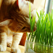 800Pcs/Set Cat Grass Seeds Oats Antioxidant Pets Health Food Avena Sativa O7H1