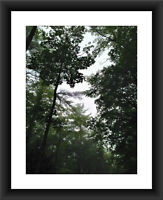 Forest Road Landscape Nature 6 A1,A2,A3 A4 Photo Print Art Poster Picture 96