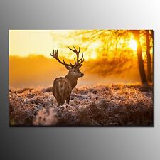 FRAMED Large Canvas Prints Poster Red Deer Printed Painting Wall Art Home Decor