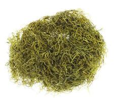 Dried Spanish Moss