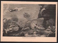 1903 gravure originale vie animale sous marine mer océan zoologie