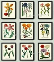 Unframed Botanical Print Set 9 Prints Antique Colorful Garden Flowers Wall Art