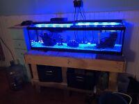 33 Gal Fish Tank