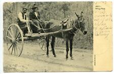African-American Couple in Mule Buggy Cart Black Americana Vtg 1907 Postcard