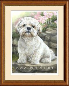 LHASA APSO fine art dog print by Lynn Paterson