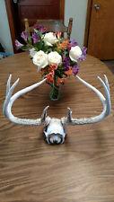 Wild Nice 8 Pt Whitetail Deer Antler Rack Horn Skull Plate Decor Man Cave