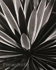 1945/92 BIG Photogravure Plate BOTANICAL Abstract HORST
