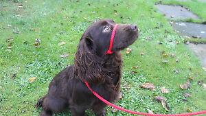 HANDMADE DOG HEAD HALTER, FIGURE OF 8, ANTI PULL LEAD.8 mm SOFT STRONG BRAID NEW