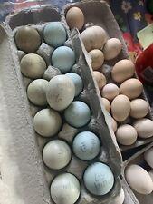 10 + Barnyard Mix Chicken Hatching Eggs (Americana/marans/Orpingt ons Etc