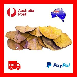10 Large Organic Indian Almond Leaves | Shrimp & Aquariums | Australia-wide