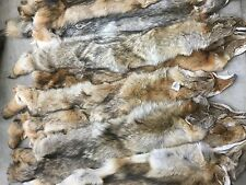 Professionally Tanned Coyote Pelts, Fur, Hide - Minnesota Brand - Grade 2