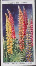 № 29 Lupin Gartenblumen von Sudell - W. D. & H. D. Wills 1939