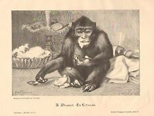 Monkey On The Table, Eating With A Spoon, Vintage 1899 German Antique Art Print