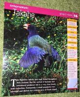 Endangered Species Animal Card - Birds - Takahe #16