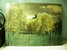 Large 14.5 x 18.5 Tinted bw Photograph Meadow Birch Trees Clouds Rural Landscape