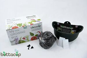 Buttacup Grow Kit Flow Planting Pot w/ Compost Tomato Basil Seeds Plant Growing