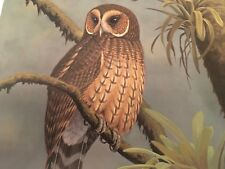 Don Eckelberry ( Mottled Wood Owl ) signed lithograph print series 2