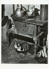POSTCARD / CARTE POSTALE PHOTO WILLY RONIS LE CHAT QUI SE CHAUFFE  / CAT CHAT