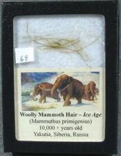 Woolly Mammoth Hair #68