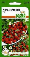 Erdbeere Monatserdbeere Rügen Winterhart - Ernte bis zum Frost - Erdbeeren Samen