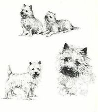 Cairn Terrier - 1963 Vintage Dog Print - Matted
