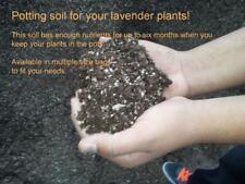 Potting soil for your lavender plants