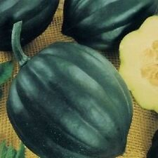 50 TABLE QUEEN ACORN SQUASH Cucurbita Pepo Seeds CombSH