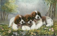 Vintage Postcard Saint Bernard Puppies on a wildflower bed Dogs