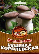 Mycelium Oyster King mushroom