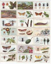 41 Vintage Insect & Bug Cards from 1914 Ladybug Snails Beetles Flies +