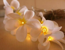 20 White Frangipani Flower LED Light BATTERY Power table runner Bali Plumeria