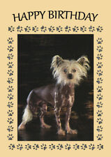 CHINESE CRESTED DOG BIRTHDAY GREETINGS NOTE CARD