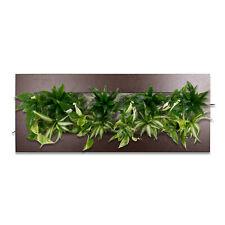 1 x Geranium maculatum /'Espresso/' Cicogna becco € 3,99 PRO ST rarità