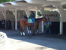 BEHOLDER 8 by 10 PHOTO 2014 Ogden Phipps Horse Race BELMONT PARK Breeders Cup #1
