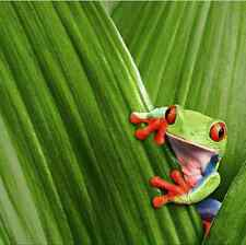 Green Frog Tropical Bright Waterproof Fabric Bath Drape Hook Shower Curtains DIY