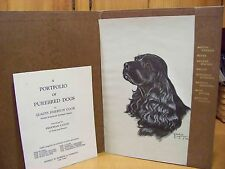 Cocker Spaniel Print Gladys Emerson Cook American Animal Artist 1st. Edition
