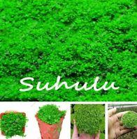 200 seeds Java Fern - Live Aquarium  Moss Anubias Fish Tank Grass Aquatic Plant