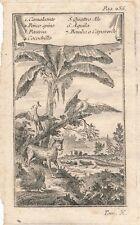 Africa Bellin animals engraving Prevost Histoire Generale Voyages 1750 Italian
