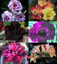 "NEW! Beautiful Adenium Obesum Desert Rose ""Mixed"" 6 Plants 6 Types!!"