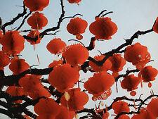 20 RED CHINESE PALACE PVC 18cm LANTERN PARTY WEDDING BIRTHDAY JAPANESE GARDEN