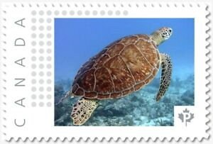 SEA TURTLE, ocean, marine Personalized Postage stamp MNH Canada 2018 p18-06sn10