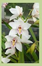 White Orchid 2014 Weekly Calendar : 2014 Weekly Calendar with a Photo of...