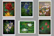 6 Wildflowers Original Photo Blank Greeting Note Cards Columbine Paintbrush