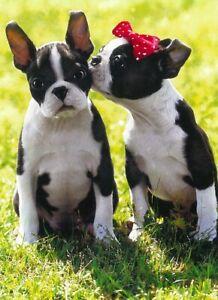 Avanti funny greeting card Valentine Valentine's love puppies kiss enclosed