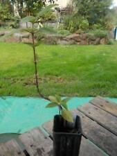 Cold Semi-evergreen Light Watering Plants & Seedlings