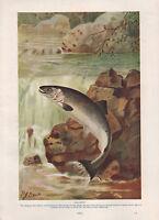 1911 Natural History Doble Costado Estampado ~ Salmón/Chimaera
